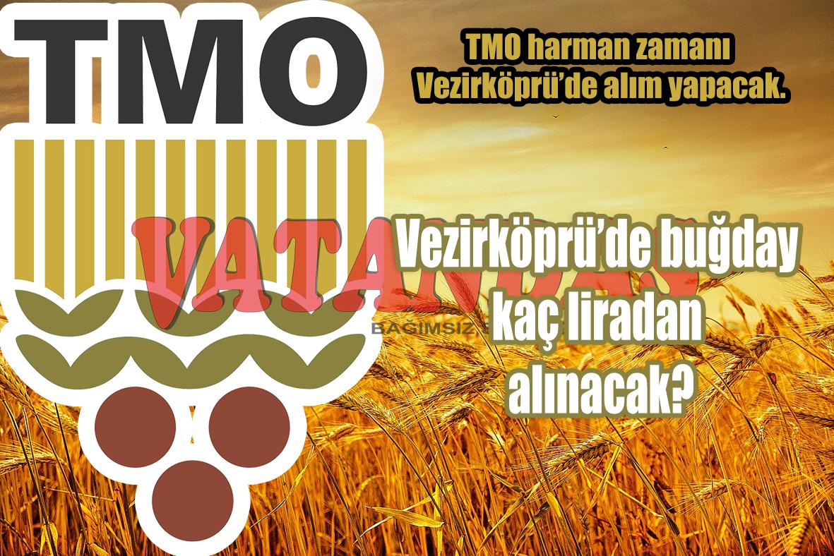 TMO harman zamanı Vezirköprü'de alım yapacak. Vezirköprü'de buğday kaç liradan alınacak?