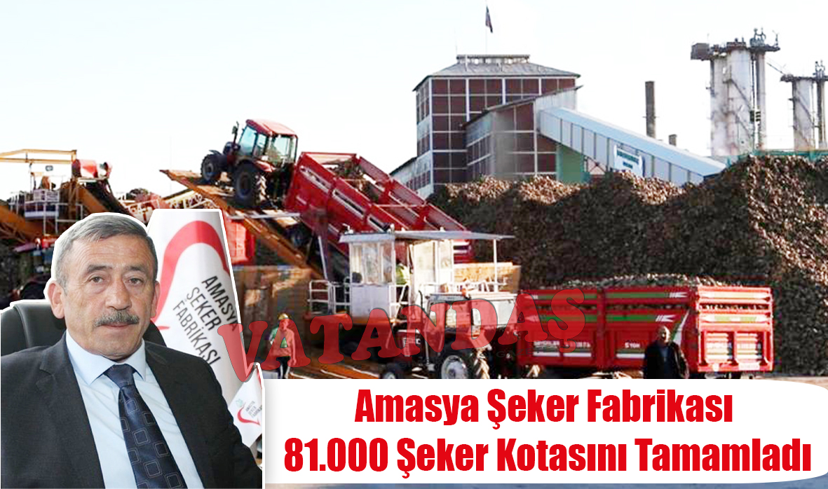 Amasya Şeker Fabrikası  81.000 Şeker Kotasını  Tamamladı