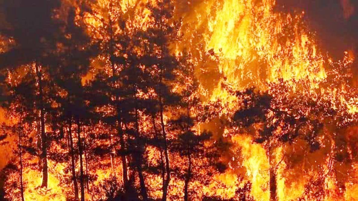 Vezirköprü'deki  Orman Yangınları